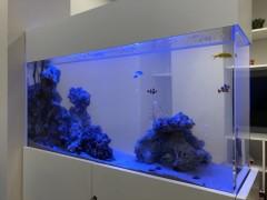 水槽色とりどりの熱帯魚が泳いでいます。